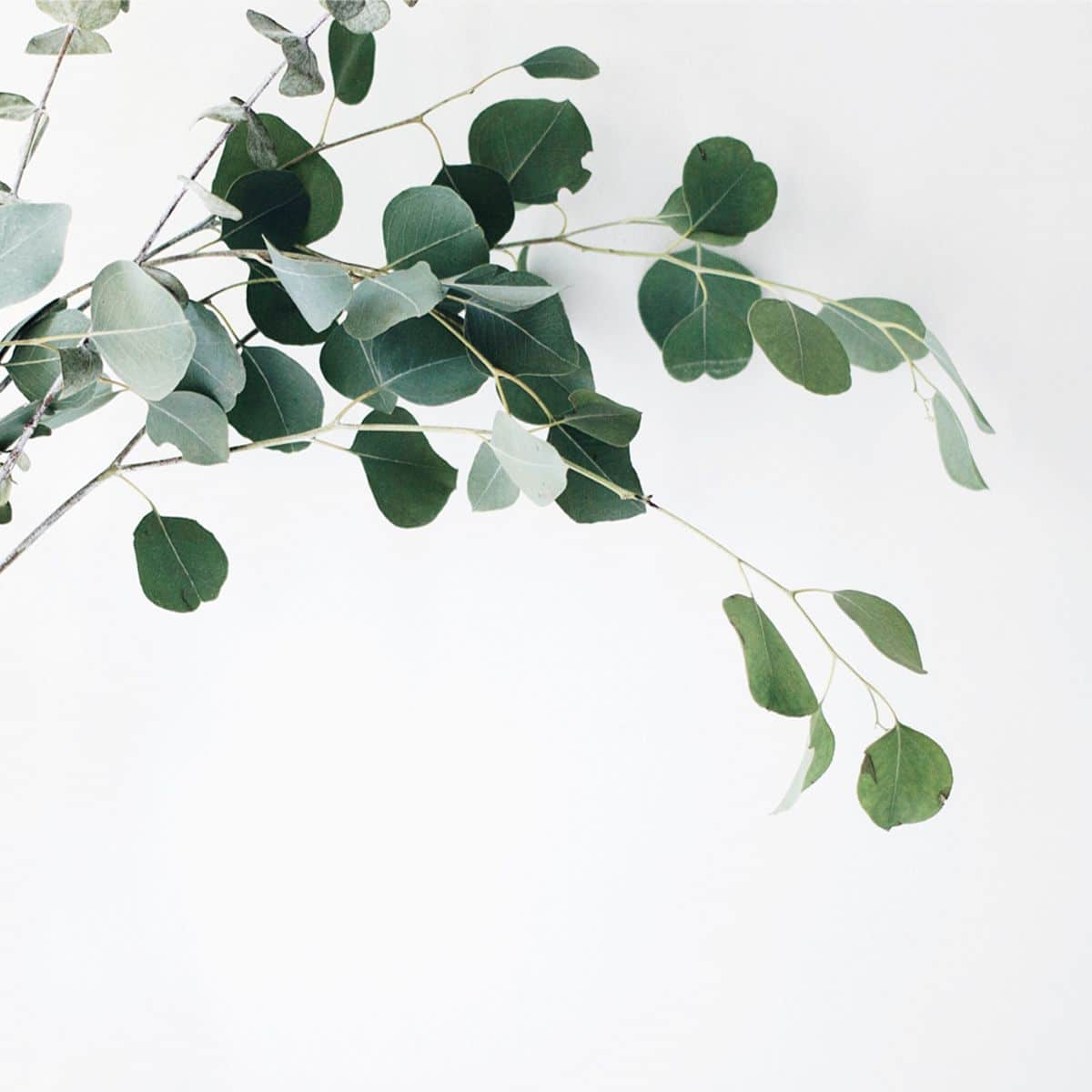 leaves hanging off a branch